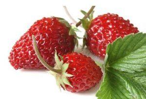 Fresa Silvestre wild strawberry Frutas del Bosque