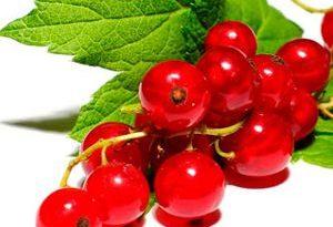 Grosella Roja red currants Frutas del Bosque