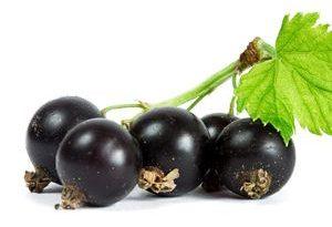 Grosella Negra Black Currants Frutas del Bosque
