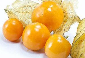 aguaymanto goldenberry