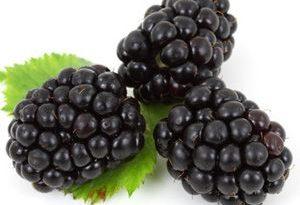 Zarzamora Blackberry Mora