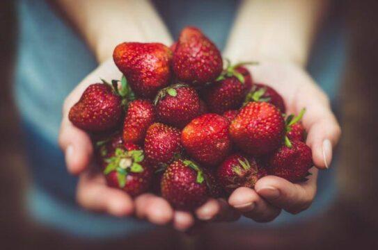 fresas fresones en mano frutos rojos
