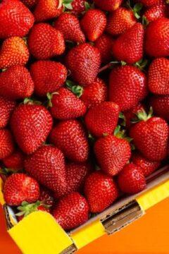 fresas frescas maduras