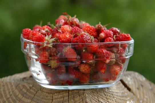 fresas temporada frutos rojos