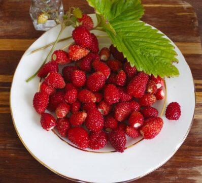 fresas fruto rojo