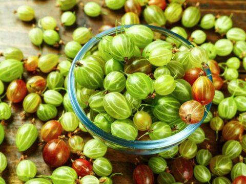 grosella espinosa comer propiedades beneficios