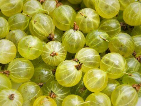 grosella espinosa frutas del bosque