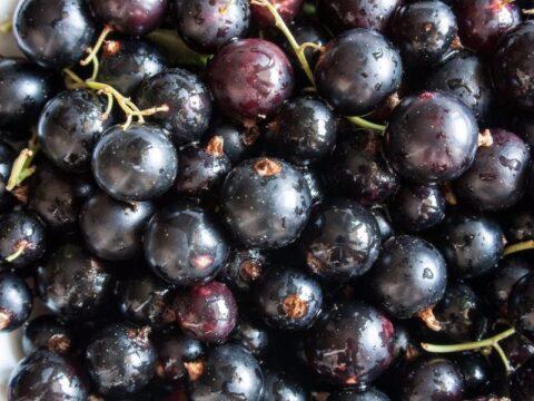 frutos rojos grosella negra blackcurrant
