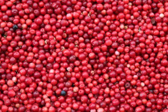 comprar arandanos rojos