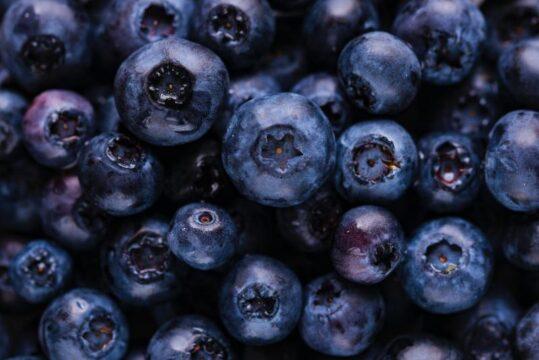 Vaccinium corymbosum blueberry arandano