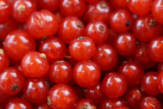 frutas del bosque grosella alpina