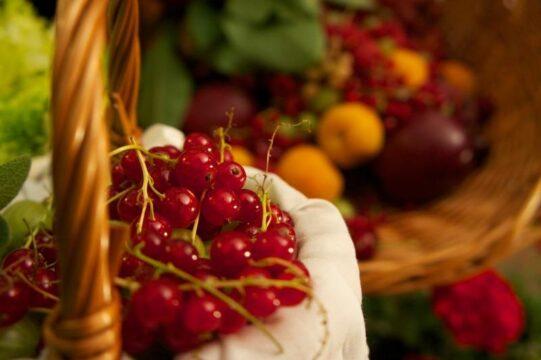 comer frutos rojos grosella alpina