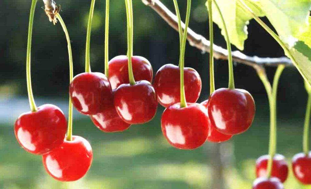color-guinda-fruta
