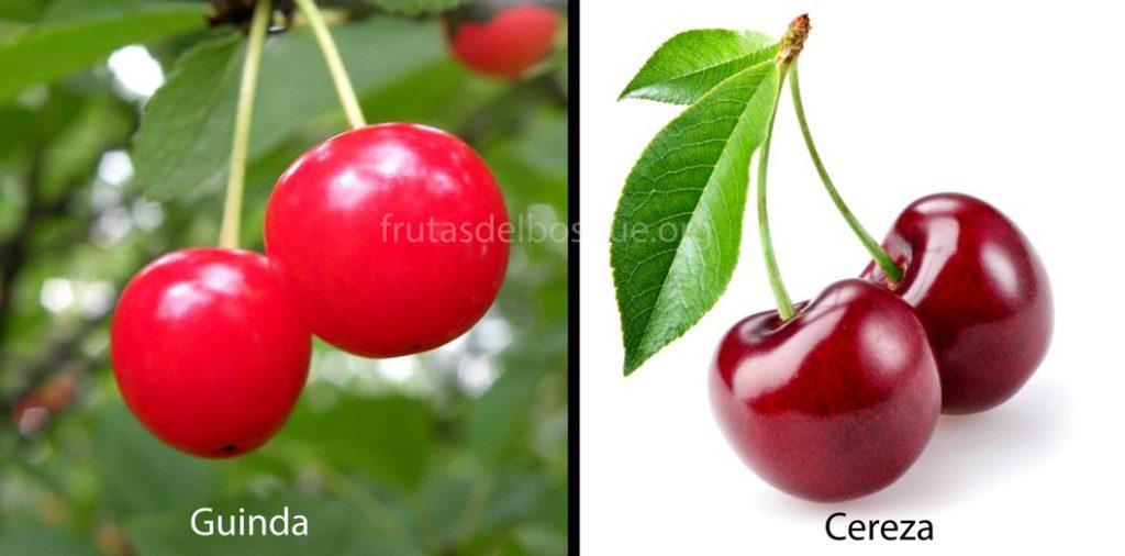 diferencia entre guinda y cereza